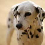 Referenz Hund Aika