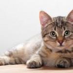 Referenz Katze Floh